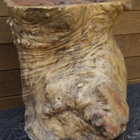 Tronc bois exotique - Exotic wood trunk
