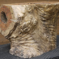 Tronc bois exotique - Exotic wood trunk